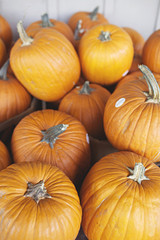pumpkins for sale - ready for Halloween carving