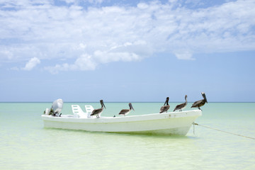 Brown pelicans rest on a fishing boat in Holbox, Mexico.