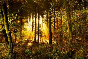 idyllische Waldlichtung mit Sonnenstrahlen im Herbst, mystischer Herbstwald am Morgen