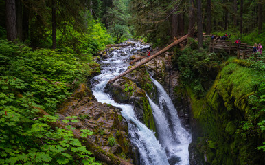 Waterfall with Rock and Moss  and tree at Sol Duc Fall