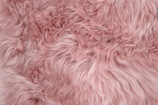 Pink sheepskin rug background sheep fur Wool texture