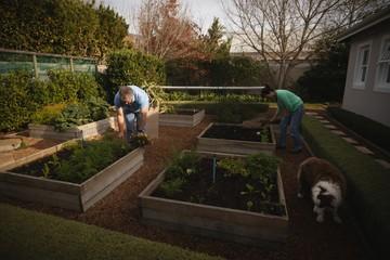 Senior couple gardening in the park