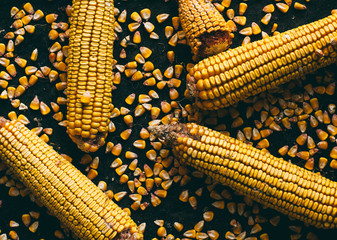 Ripe Corn on Black Background