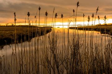 Sea marsh at twilight