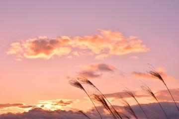 秋の風景 ススキと夕陽