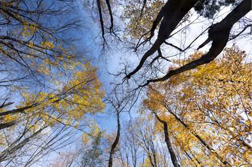Bon Echo Ontario Landscape Fall Autumn Colors Background