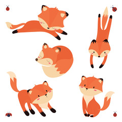 cute fox set