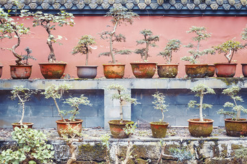 Rows of bonsai trees, color toning applied.