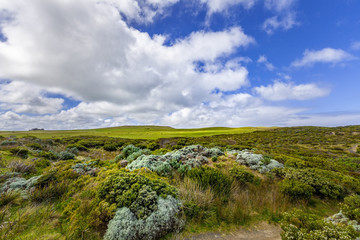 Australian coastal vegetation and white fluffy clouds in blue sk