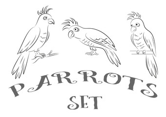 Cartoon Birds Parrots, Black Contours Isolated on White Background. Vector