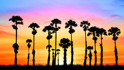 silhouette palm tree on blurry sunset background