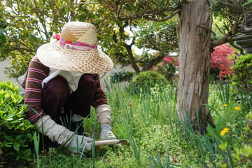 Elderly woman doing agricultural jobs