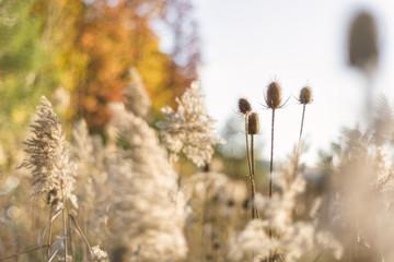Paisajes de Otoño / Fall Landscapes