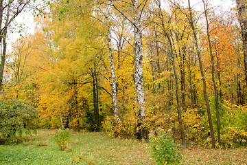 Autumn park. Outdoor landscape