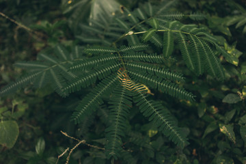 Tropical leaf texture, dark green foliage nature background. Jungle plant leaves on blurred background. Natural ornament, green abstract texture and background for designers. Patterns for wallpaper.