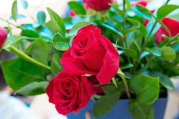 Close-up photo of a red roses bonteque backgrounds. Rose in Valentine's day