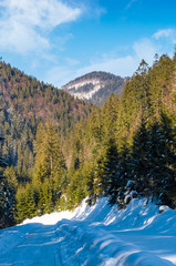 road through coniferous forest in winter. lovely nature scenery in mountains