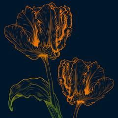 Vector tulips.