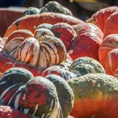 Autumn Carving Pumpkins for Sale at Pumpkin Patch