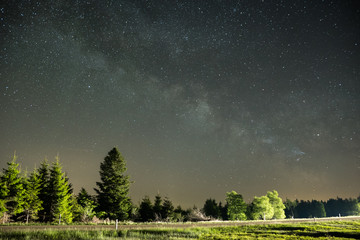milkyway over forest