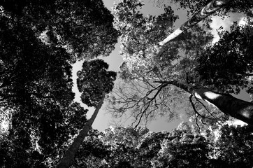 Natureza em preto e branco