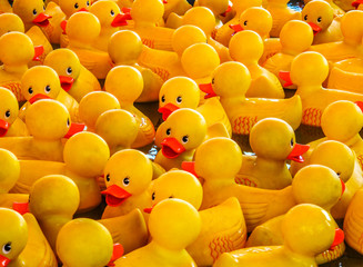 Rubber ducks at state fair