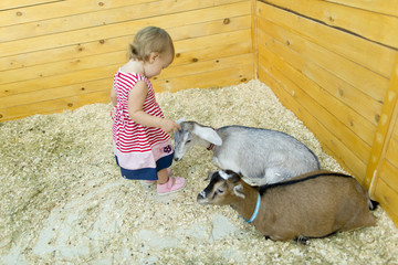 Baby girl plays with goats in the petting zoo