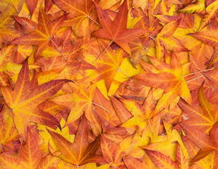 Some colourful leaves on the ground