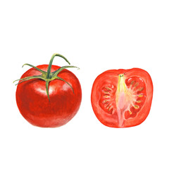 Botanical watercolor illustration of whole and cut tomato on white background