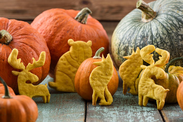 Homemade wild animal shaped cookies: bear, moose, wolf with raw pumpkins on shabby blue table. Autumn dessert