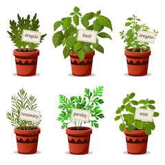 Set of culinary herbs in pots with name plates with arugula basil oregano rosemary parsley mint. Vector illustration.