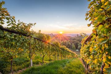 Sonnenaufgang in den Weinbergen in der Steiermark