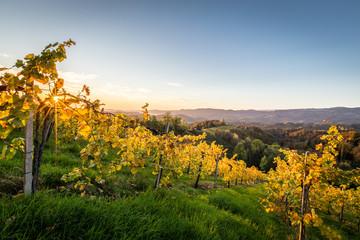 Sonnenaufgang in den Weinbergen an der steirischen Weinstrasse im Herbst