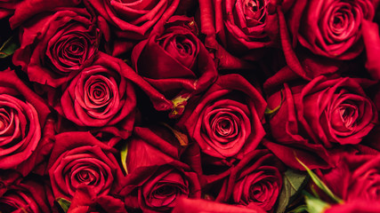 .Red roses background close-up. hundreds of roses in a bouquet