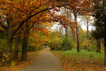 Autumn park. Outdoor landscape