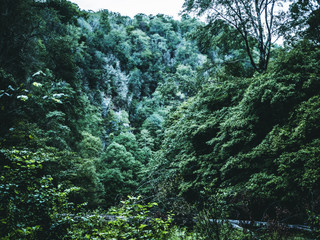 massive forest on the mountain