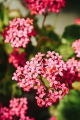 Beautiful home flower
