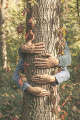Hands of love couple embracing a tree. Colorful autumnal leaves.
