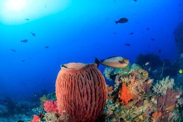 Deurstickers Onder water Sponges and tropical fish on a coral reef