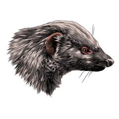 civet Mungo sketch head vector graphics color picture