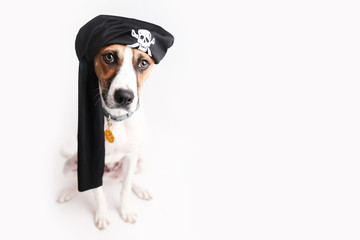 Dog dressed up like a pirate for Halloween