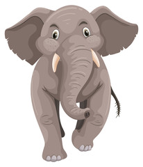 Baby elephant with gray skin
