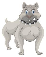 Pitbull dog with spike collar