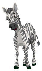 Little zebra on white background