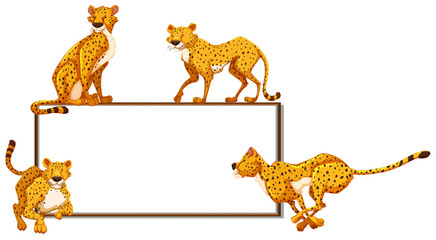 Whiteboard and many cheetahs