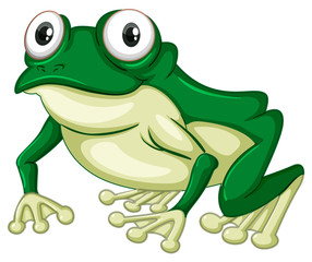 Green frog on white backgound