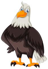 Wild eagle on white background