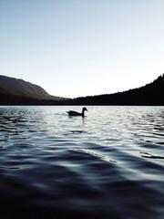 Duck Ness Monster