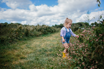 little girl picking raspberries in overalls and boots