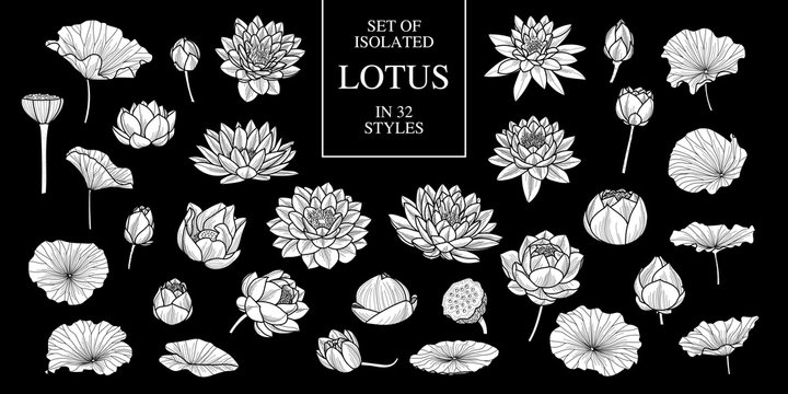 Set of isolated white silhouette lotus in 32 styles .Cute hand drawn flower vector illustration in white plane and no outline.